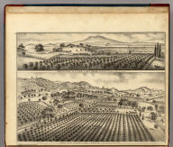 """Orange, Lime, Chestnut and Olive Groves of Geo. F. Hooper, San Pablo Bay and """"Monte Diablo"""" in Distance. (with) Residence, Vineyards and Orchards of Geo. F. Hooper, Sonoma, California."""