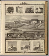Maple Grove Herd, residence of D. Cookson & Sons ... near West Liberty, Iowa. (with) Mt. Vernon House, Mt. Vernon, Iowa. (with) Flouring mill of Greer & Hunter, Decorah, Iowa. (with) W. Taylor Dry Goods &c., Spillville, Iowa. (with: Bloomfield Mills, G. Priest & Son.) Dealers in grain ... Bloomfield, Davis Co., Iowa. (with) View of St. Benedict's Church & parsonage, Decorah, Iowa. (with) Catholic Church and pastoral residence, Cresco, Iowa. (with) First M.E. Church, Marshalltown, Iowa. (Published by the Andreas Atlas Co., Lakeside Building, Chicago, Ills. Engraved & printed by Chas. Shober & Co., Props. of Chicago Lithographing Co.)