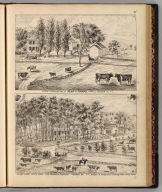 Stock farm and res. of Julius C. Thomas, Orwell, Addison Co., Vt. Barry & Packard (del.). (with) Sylvan Shade Stock Farm, E.D. Griswold, proprietor, Addison Co., Vt. A.S. B(erry and) H.S. P(arker, del.). (Published by H.W. Burgett & Co. 36 Vesey Street, New-York. 1876. Entered ... 1876 by H.W. Burgett & Co. ... Washington D.C. Engraved & printed by J.B. Beers & Co. 36 Vesey St. N.Y.)