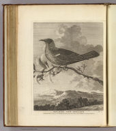 Poe-bird, New-Zeeland. No. LII. Published Feby. 1st., 1777 by Wm. Strahan in New Street, Shoe Lane & Thos. Cadell in the Strand, London.