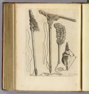 (Specimens of New Zealand workmanship, &c). Record, sculp. No. XIX. Published Febry. 1st, 1777 by Wm. Strahan in New Street, Shoe Lane & Thos. Cadell in the Strand, London.