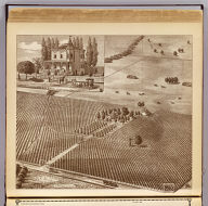 A view on the Peerless Vineyard of 240 acres, E.E. Bush owner, Hanford, Tulare Co., Cal. (with) Residence of E.E. Bush, Hanford, Cal. (1892)