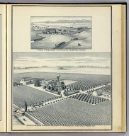 Estella Blanca Vineyard, property of F.M. Roessler, Fruitvale, Fresno Co. (with) Ranch and residence of S(tephen) Hamilton, Red Banks, Fresno. (Compiled, drawn and published from personal examinations and surveys by Thos. H. Thompson, Tulare, California, 1891)