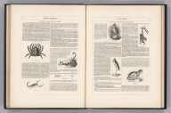 (Text Page) Physical Phenomena of the Globe. Organic Life (continued).
