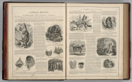 (Text Page) Natural History, Interesting and Curious Animals.