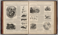 (Text Page) Natural History, Interesting and Curious Animals (continued).