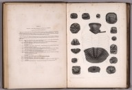 Table I. Trilobites of the lowest sandstones of Wisconsin and Minnesota