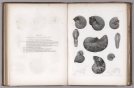 Table VIII. Ammonites and Scaphites, from the cretaceous formation of Nebraska