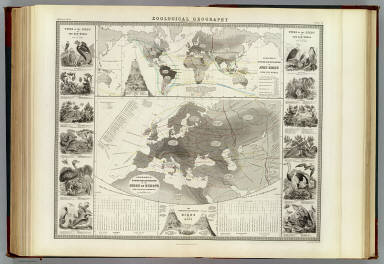 Zoological geography. Geographical division and distribution of the birds of Europe from the latest authorities by A.K. Johnston, F.R.G.S. Geographical division of Aves, birds, over the world. Engraved by W. & A.K. Johnston. William Blackwood & Sons, Edinburgh & London. (1856)