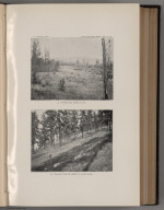 View: Plate IX. A. Upper Swan River Valley. B. Yellow (Ponderosa) Pine on Shore of Placid Lake.