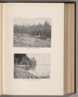 View: Plate XVII. Effect of Repeated Fires. East Shore of Swan Lake, near Bond's.