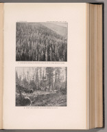 View: Plate XXIV. Engelmann Spruce South of Upper Montour Creek. Stump Land Unburnt.