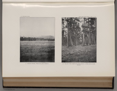 View: Plate VII. Mission Range, from Holland's Ranch. Yellow Pine, Upper Swan River Valley.