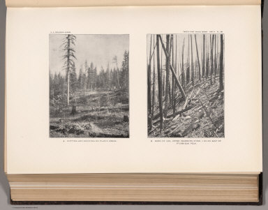 View: Plate XIII. Cutting and Skidding on Placid Creek. Burn of 1889, Upper Dearborn River.