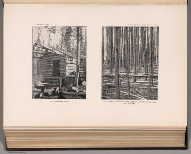 View: Plate XXIII. Homestead Cabin. Thinning among Lodgepole Pine, Upper Swan River Valley.