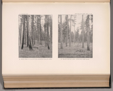 View: Plate XXVI. Mixed Forest of Yellow Pine, Lodgepole Pine, and Larch. Upper Swan River Valley.