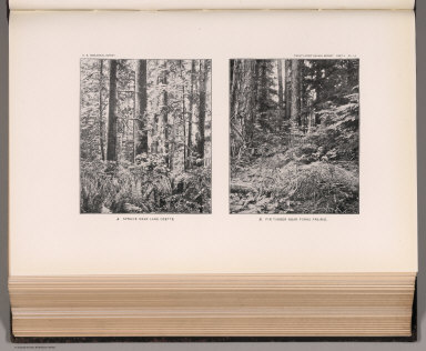 View: Plate LV. Spruce near Lake Ozette. Fir Timber near Forks Prairie.