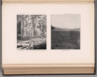 View: Plate LXIV. Fir Timber, 100,000 B.M. to the Acre. Forks Prairie.