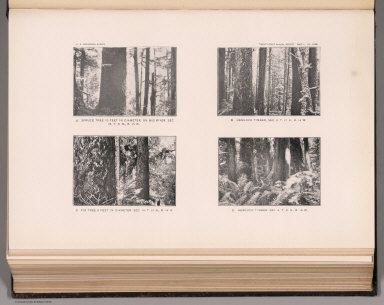 View: Plate LXVII. Spruce Tree, on Big River. Hemlock Timber. Fir Tree. Hemlock Timber.