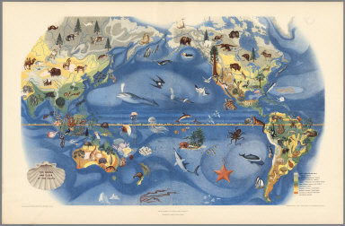 Plate II. The Fauna and Flora of the Pacific. Pageant of the Pacific.