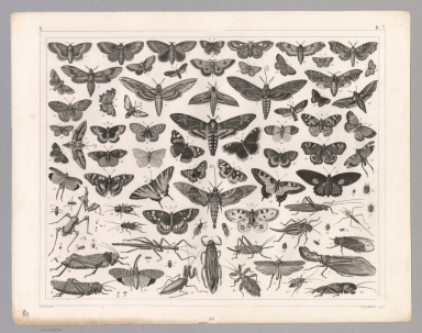 View: Plate 80. Zoology: Animals including Insects.
