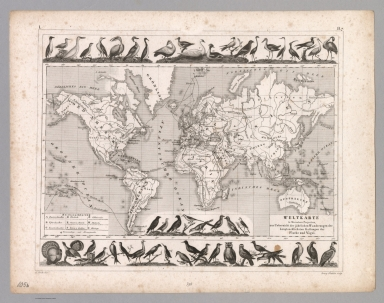Plate 105b. Zoology: Migrations of Fishes and Birds.