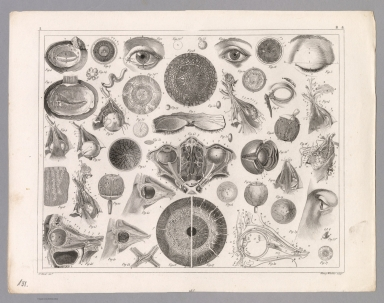 View: Plate 131. Anatomy including the Eye.