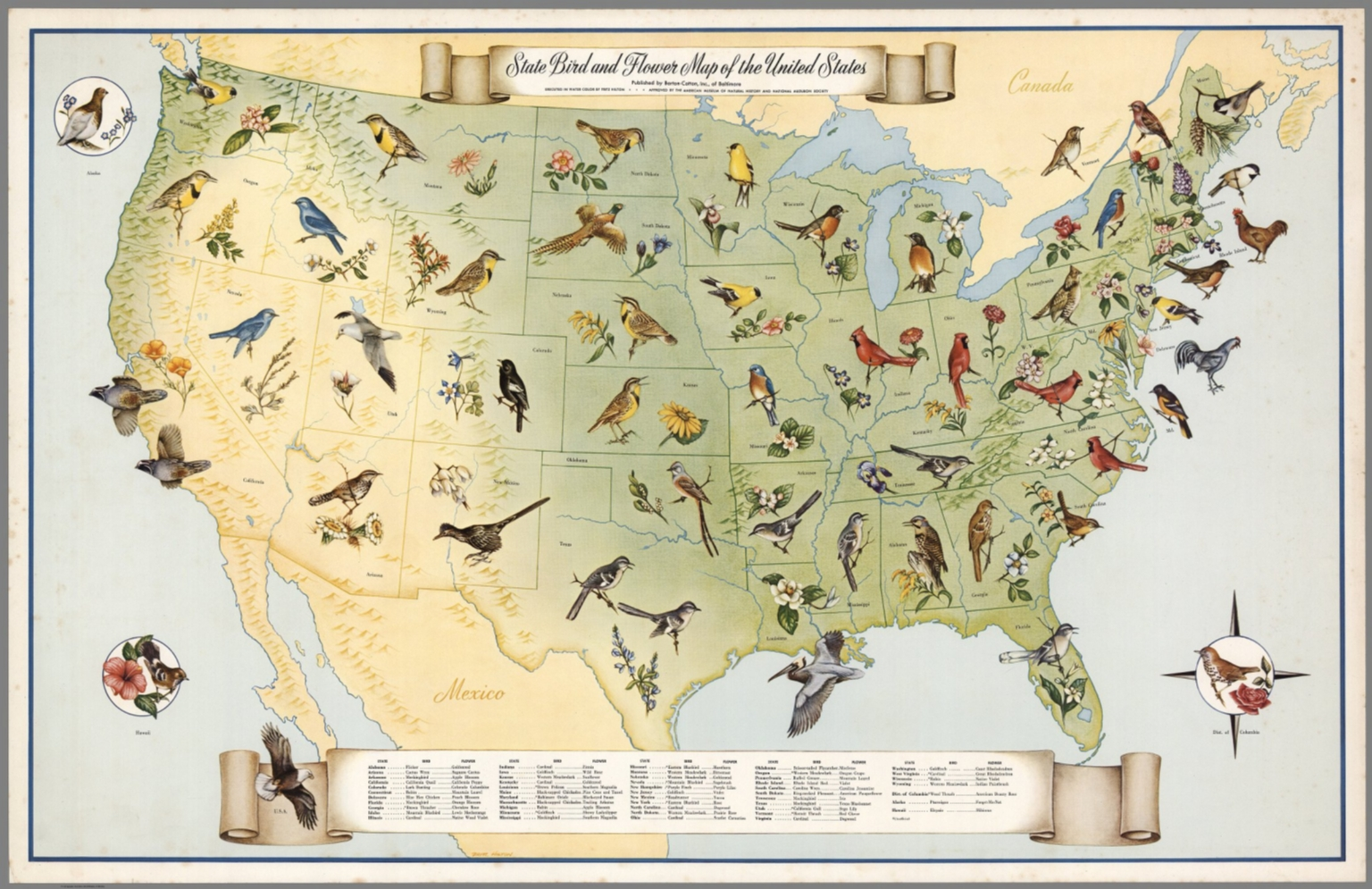 State Bird And Flower Map Of The United States David Rumsey - Us on the map